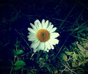 flower, white, and nature image