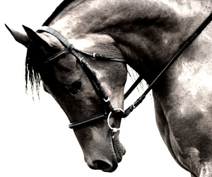 beauty, horse, and riding image