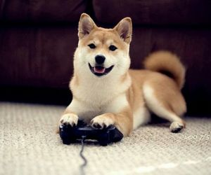 dog, cute, and gamer image