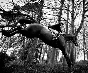 flight, horse, and jumping image