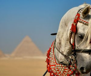 horse, egypt, and pyramids image