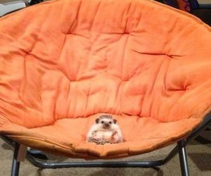 animal, funny, and seat image