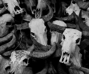 skull, black and white, and creepy image
