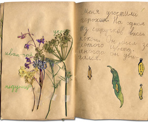 brown, journal, and pressed flowers image
