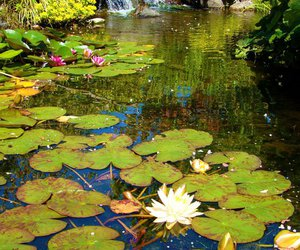 waterfall, pond, and lilly pads image