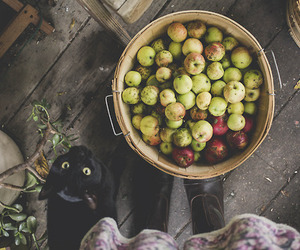 apple, cat, and autumn image