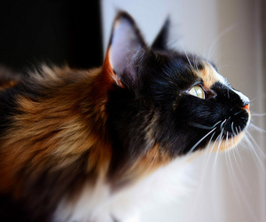 cat, animal, and pretty image