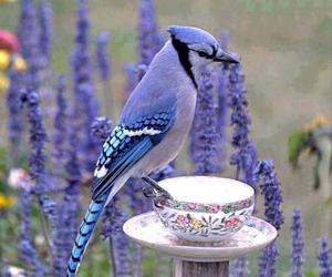 bird, flowers, and purple image