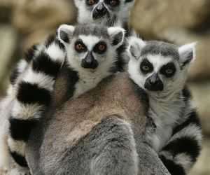 holiday, madagascar, and tourist attraction image