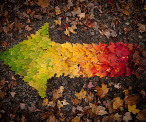 autumn, leaves, and arrow image