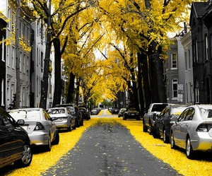 black and white, street, and yellow image