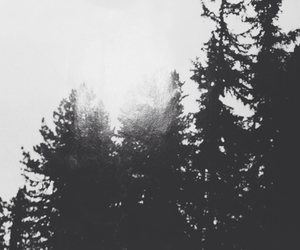black and white, forest, and indie image