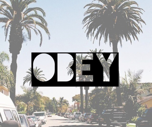 obey, palm, and summer image