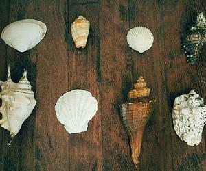 shell, sea, and vintage image