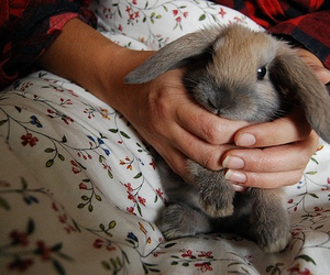 adorable, bunny, and trendy image