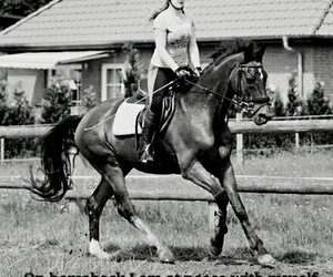 beautiful, dressage, and equestrian image
