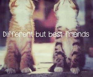 cat, different, and friends image