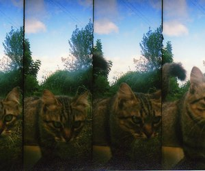 beautiful, cat, and lomography image
