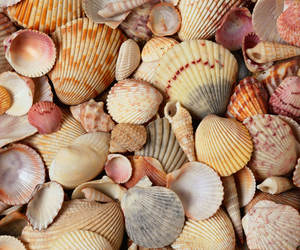 summer, shell, and beach image