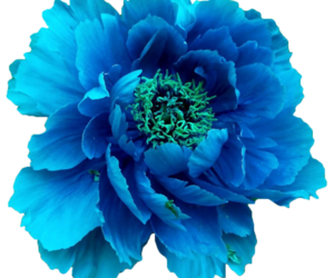 transparent, flower, and overlay image