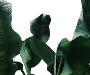 overlay, plants, and transparent image