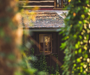 cottage, woods, and weheartit image