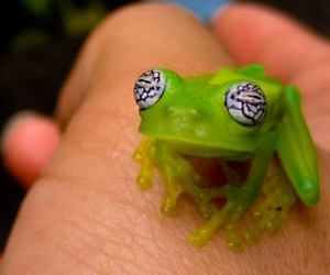 eyes, frog, and green image