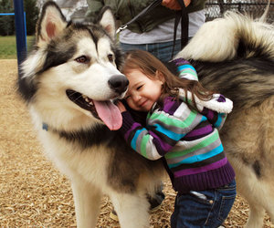 dog, husky, and kids image
