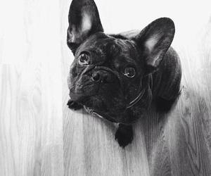 adorable, bulldog, and dog image