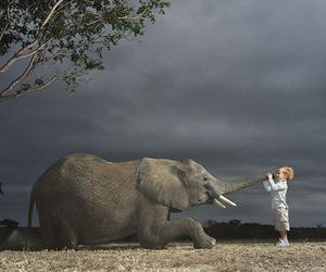 elephant and child image