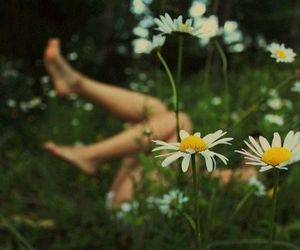 daisies, grass, and happy image
