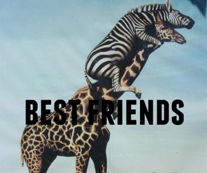 friends, best friends, and animal image