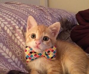 adorable, cat, and kawaii image