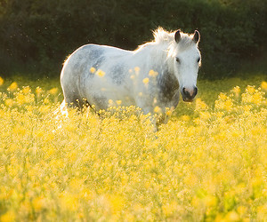 flowers, horse, and nature image