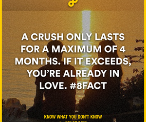 crush, fact, and love image