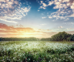 nature, sunrise, and Wild Flowers image