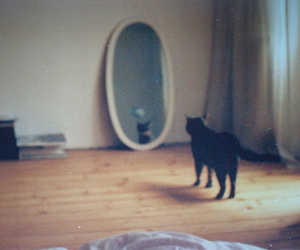 cat, mirror, and photography image