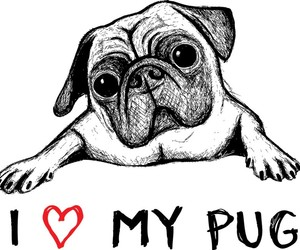 pug, love, and drawing image