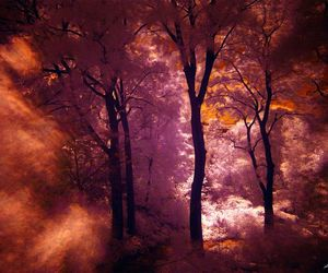 forest, infrared, and photography image