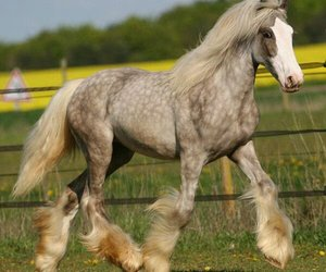animals, gorgeous, and horses image
