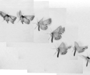 moth, black and white, and butterfly image