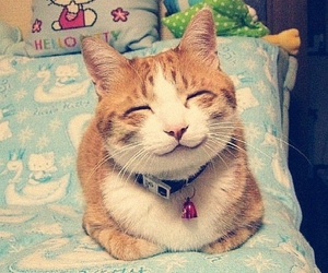 cat, cute, and smile image