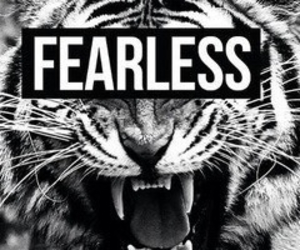 fearless, tiger, and animal image