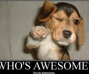 awesome, cute, and dog image