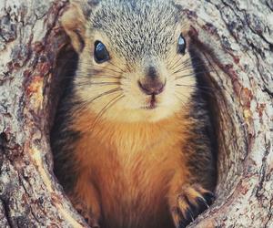 animal, tree, and chipmunk image