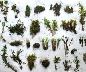 collection, bryophyte, and green image