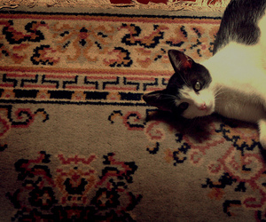 cat, tapete, and floor image
