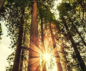 nature, sun, and trees image