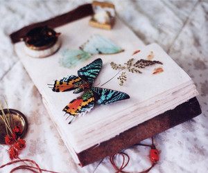 butterfly, book, and vintage image