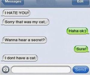 cat, funny, and hate image